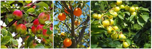 arboles frutales cuidados