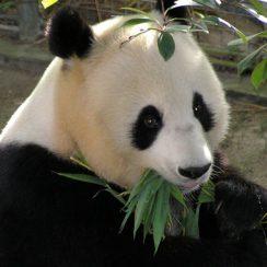 como salvar a los animales en peligro de extincion
