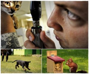 cuidado de los animales domesticos