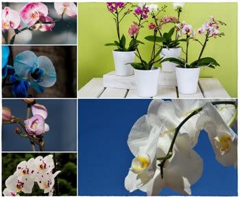 cuidados-de-las-orquideas-para-que-florezcan
