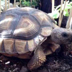 cuidados de las tortugas
