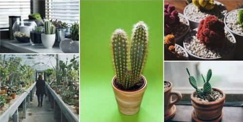 cuidados-de-un-cactus