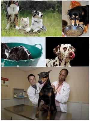 cuidados-de-un-perro