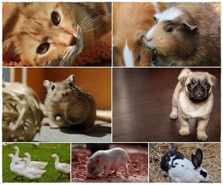 proteccion-de-los-animales